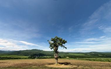 Tree House People, y su creador Takashi Kobayasi