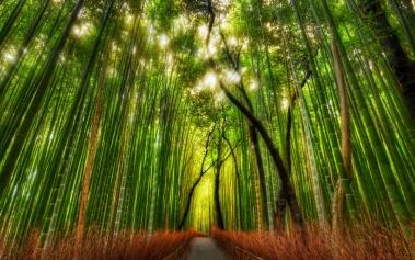 Arashiyama Bamboo Grove: impresionante bosque de bambú