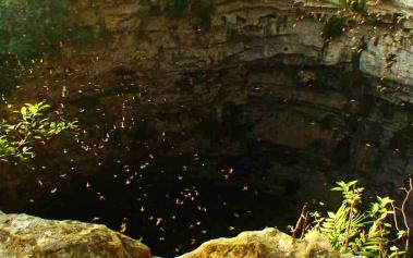 Sótano de las Golondrinas: un gigantesco refugio de aves