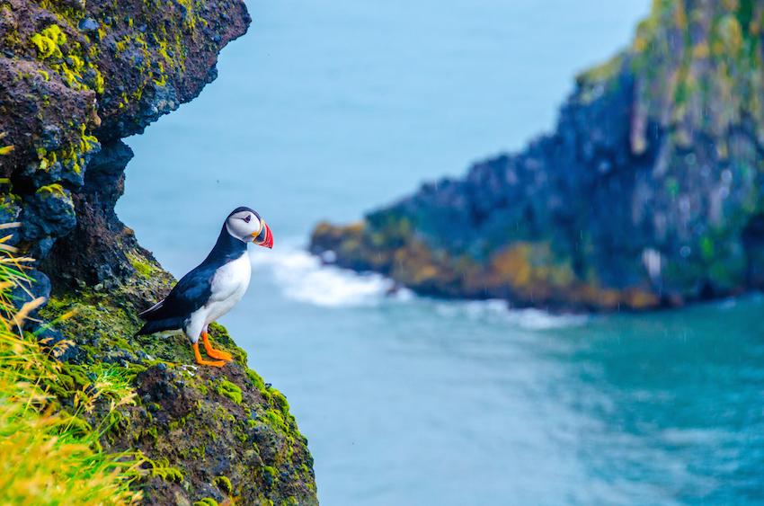 6 cosas que no te puedes perder en un viaje a Islandia