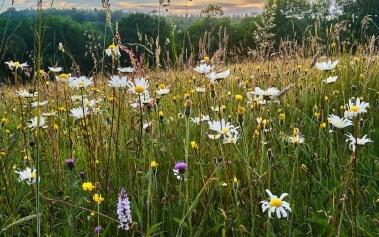 Weald, el jardín de Inglaterra y los Puertos de Cinque