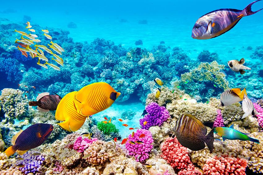 Resultado de imagen para Gran barrera de coral