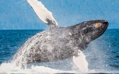 10 lugares donde disfrutar del avistamiento de ballenas