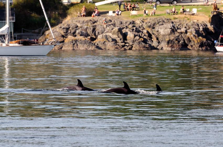 10 lugares donde podemos disfrutar del avistamiento de ballenas