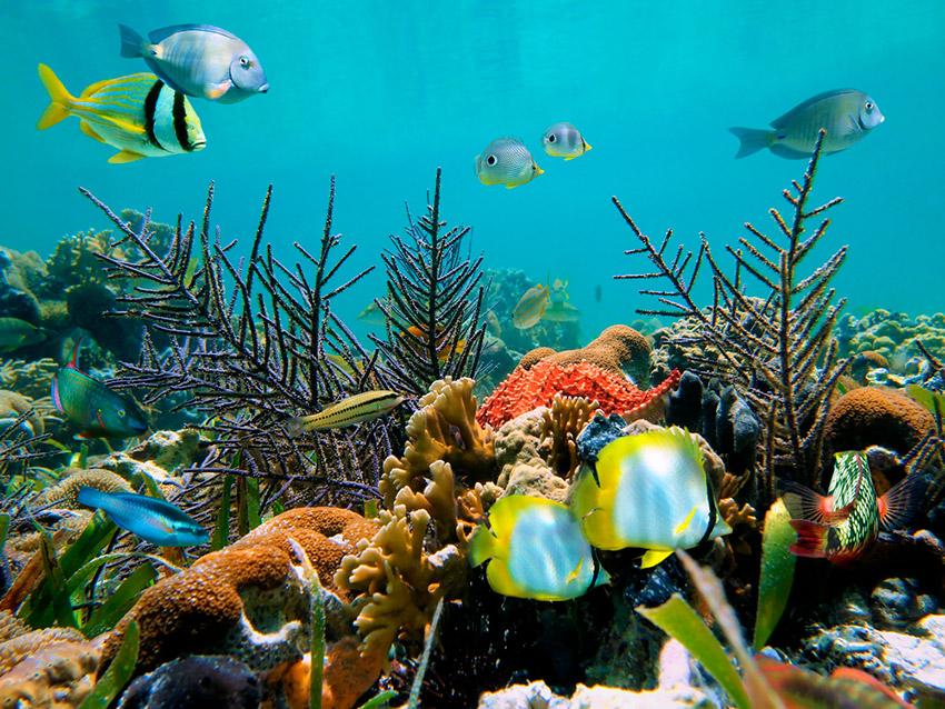 Tulum, una ciudad bañada por el Mar Caribe que debes visitar