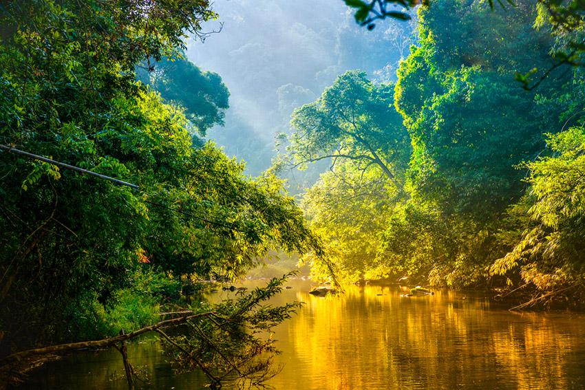 Las mejores selvas del mundo para perderse