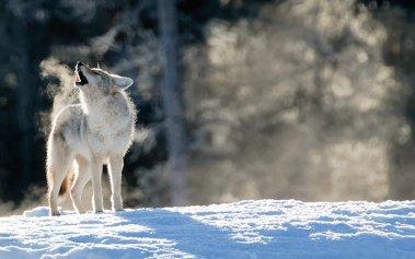 10 viajes donde podrás disfrutar de los animales salvajes