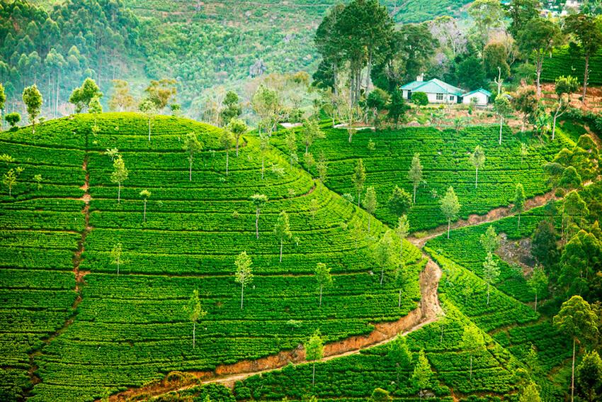 Razones para viajar a Sri Lanka cuanto antes