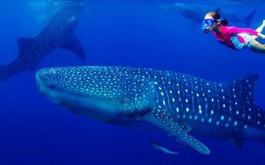 Nadar con delfines y ballenas: 5 lugares del mundo donde puedes hacerlo