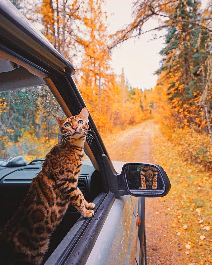 Sukii, la gatita viajera que enamora en Instagram