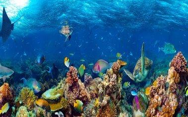 Visita los mejores acuarios del mundo