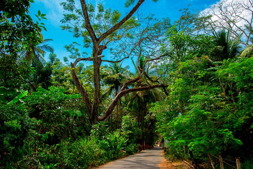 Tamarindo y Jacó, uno de los destinos en Latinoamérica antes de los 30
