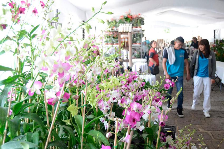 Feria Nacional de la Orquídea, uno de los eventos de México