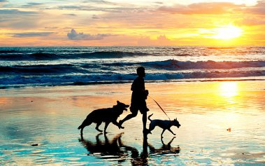 Playas para perros en México donde disfrutar con tu mascota