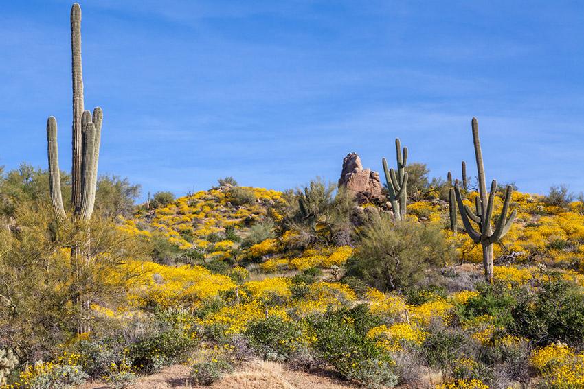 Sur de Arizona, uno de los lugares dónde viajar en primavera