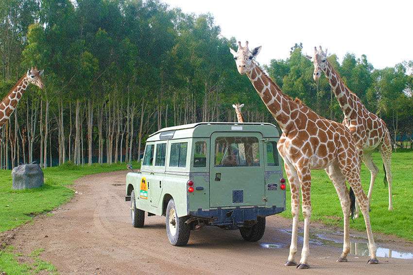 Tuzoofari, uno de los lugares para observar la naturaleza salvaje en México
