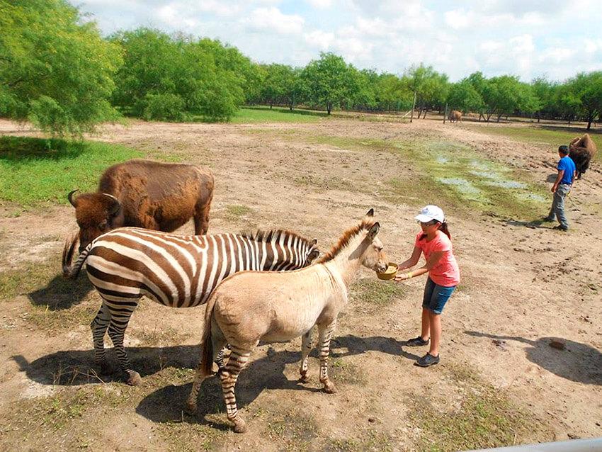 Zoológico de Reynosa, uno de los lugares para observar la naturaleza salvaje en México