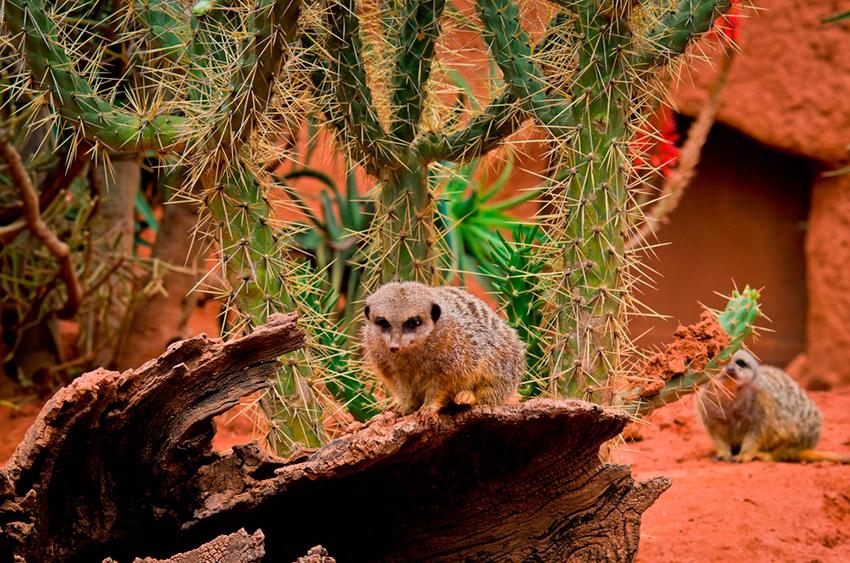 Africam Safari, uno de los lugares para observar la naturaleza salvaje en México