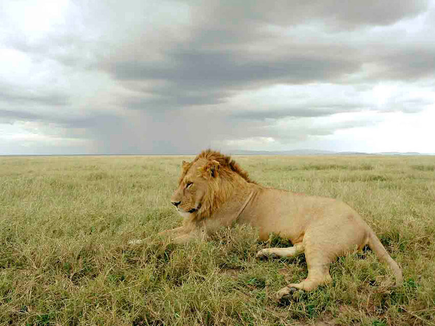 Safari Masai, uno de los lugares para observar la naturaleza salvaje en México