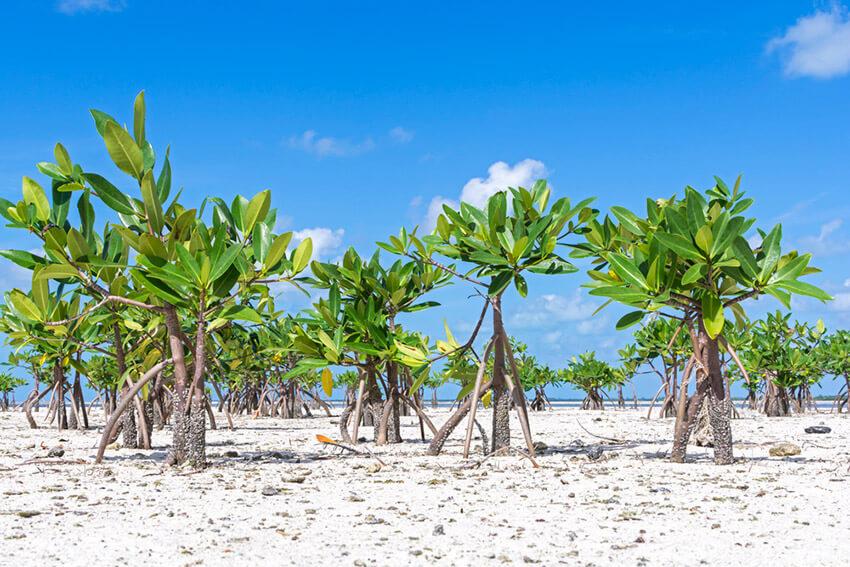 Laguna Chacmuchuc, una de las playas tranquilas cerca de Cancún