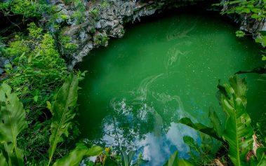 Cenotes Ocultos en Yucatán: el Cenote Arco Iris