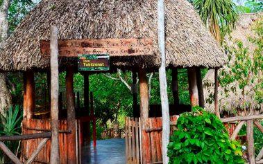 Cenotes Ocultos en Yucatán: el Cenote Yokdzonot