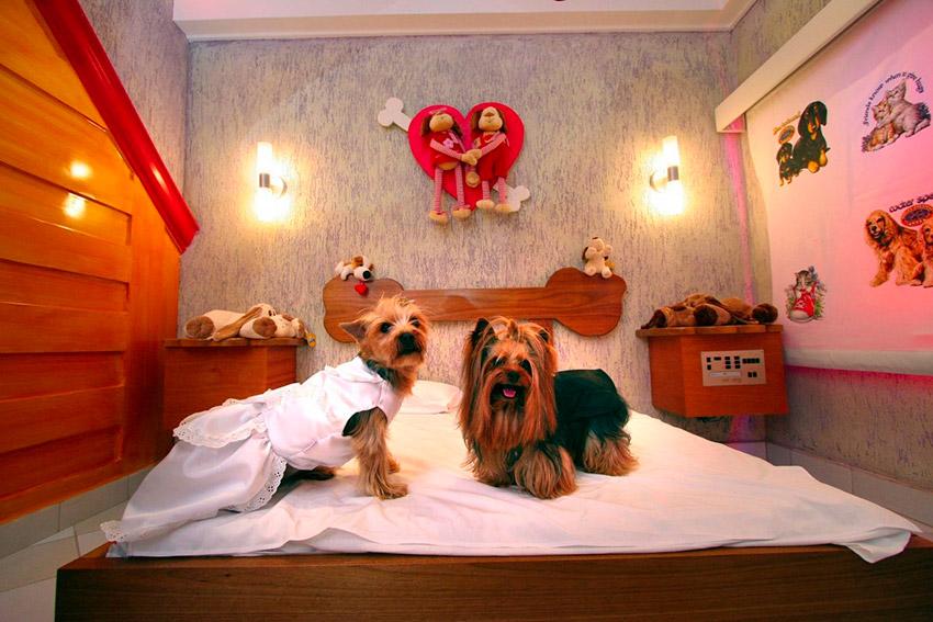 Critterati, el primer hotel de lujo para perros