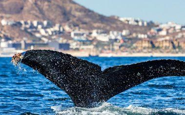 Naturaleza Salvaje en México: el avistamiento de ballenas en Los Cabos