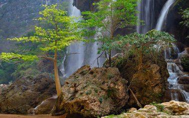 Selvas húmedas en México: la Reserva de la Biosfera El Ocote