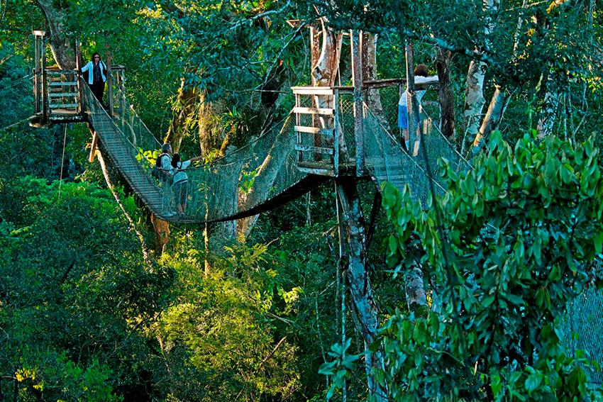 Torres Canopy, uno de los paisajes del Amazonas en Ecuador