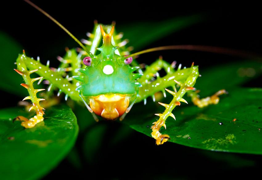 Tu botiquín, uno de los consejos para recorrer el Amazonas