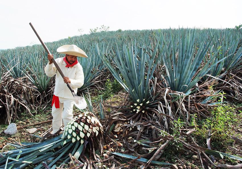 Tequila, uno de los pueblos escondidos en México