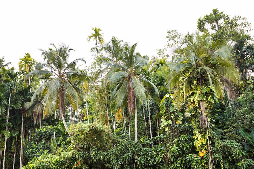 Deportes de aventura, una de las cosas qué hacer en Fiji
