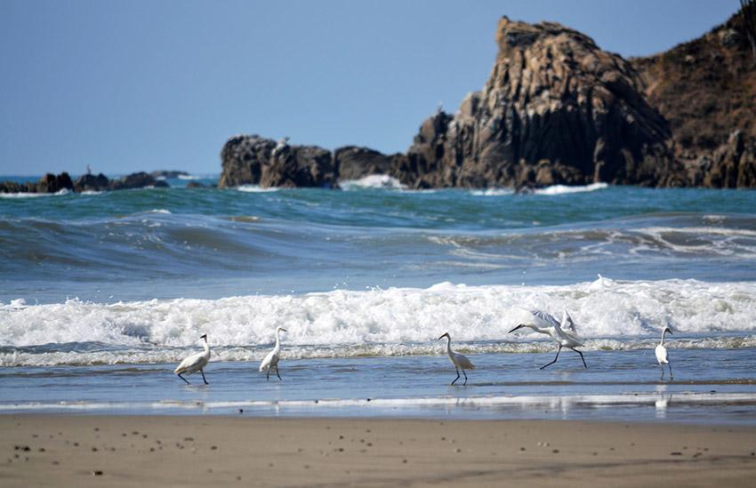 Bahía del Órgano y el Maguey, una de las mejores bahías de Oaxaca