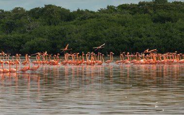 Las playas tranquilas más bonitas de Yucatán