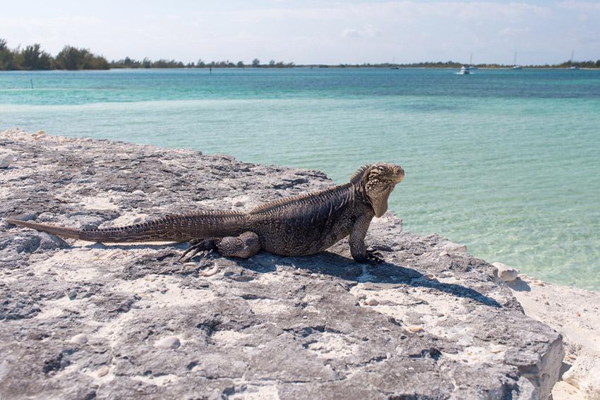 Cayo Iguana, uno de los cayos de Cuba
