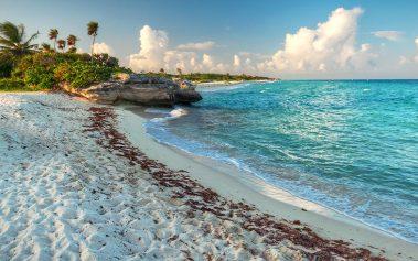 Descubre estos restaurantes y tiendas de la ruta vegana en Playa del Carmen